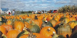 Fourth annual APEGNB Pumpkin Fling ready for blast-off Sept. 23