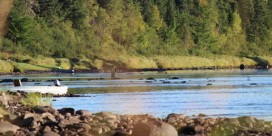 Miramichi Fishing Report for Thursday, September 20, 2012