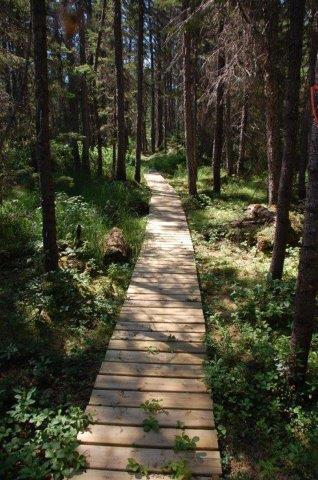Boardwalk on portion of trail. Photo by Tim Humes.