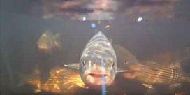 DFO Announces 2017 Striped Bass Regulations