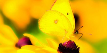 "Poem: ""butterflies and dragonflies"" by lynn mac donald"
