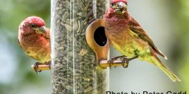 Help Feeder Birds Stay Healthy