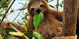 Diversity of Living Things – Meet a Sloth!