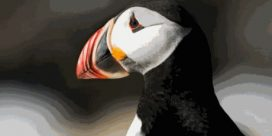 The Secret Travelling Life of the Atlantic Puffin