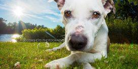 Miramichi Photographer Offering Dog Portraits to Benefit Local SPCA