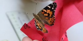 Purchase Your Memorial Butterfly by June 30th