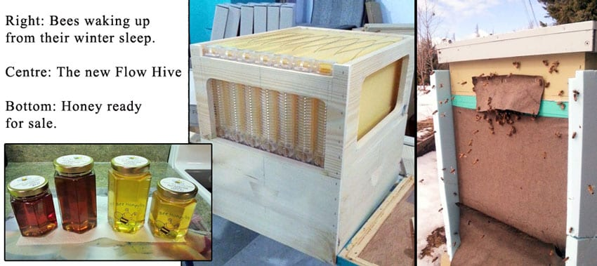 My Lil' Bee Honey Farm