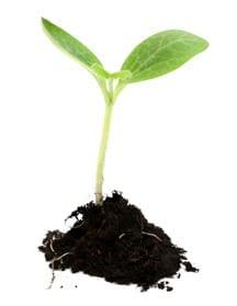 plant-in-soil