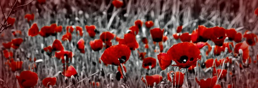 2016 Remembrance Day Events In Northumberland County