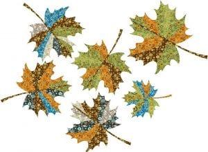 autumn-leaves-maple