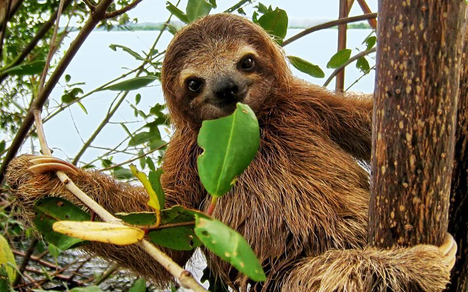 Diversity Of Living Things Meet A Sloth Giver On The